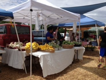 Local Farmers Markets Help Reduce Obesity Rates