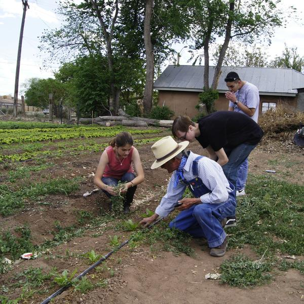 High school students planting crops at Grow the Future in the South Valley near Albuquerque. Credit Ed Williams