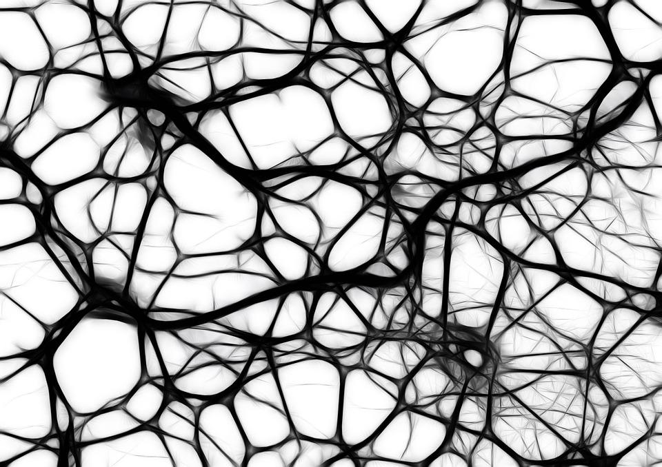 Neurons, brain cells and structure. Fetal tissue research at UNM's Health Sciences Center has been used to test treatments that could help premature infants with brain development. PIXABAY VIA CC